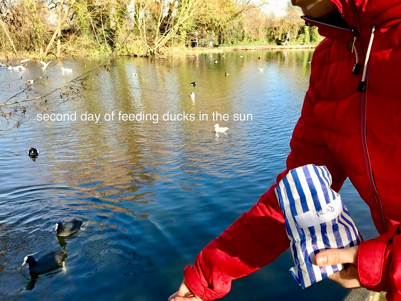 Feeding ducks and sun