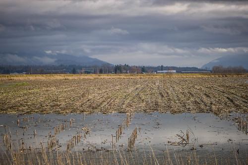 Skagit Valley Flooded Fields-002