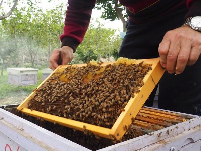 古坑三美養蜂 (14)