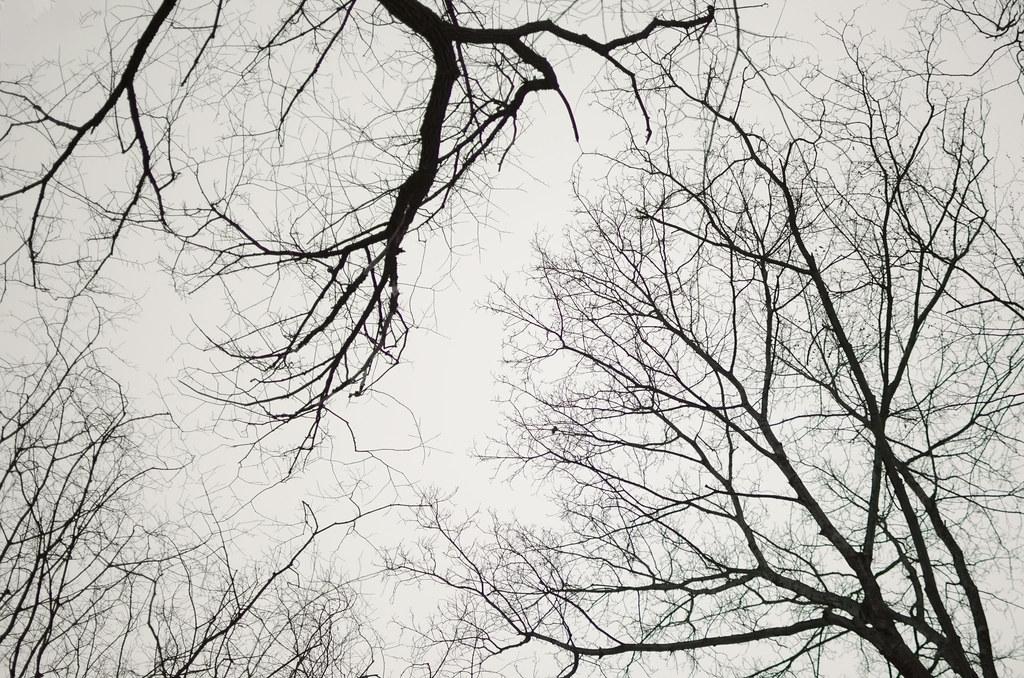 in the woods quadragesima 8