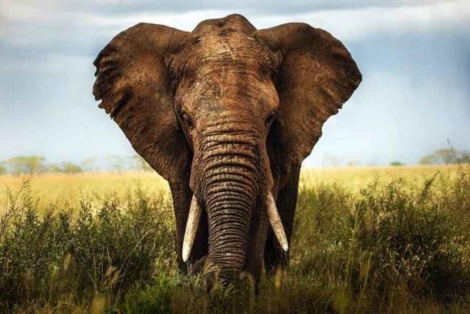 elephant_gnénome_population_protection_2018