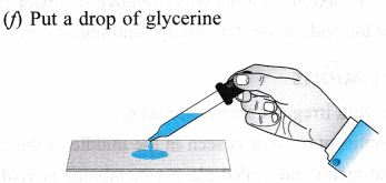 ncert-class-9-science-lab-manual-slide-of-onion-peel-and-cheek-cells-7