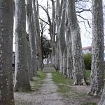 20180107 Cozes bomen