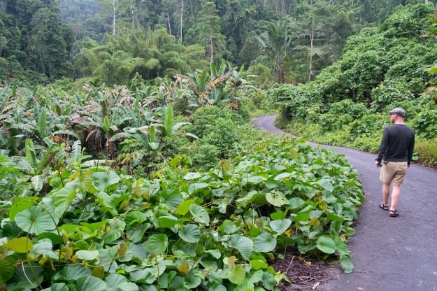 Jungle road on Waigeo