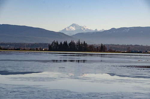 Skagit Morning Birds-1