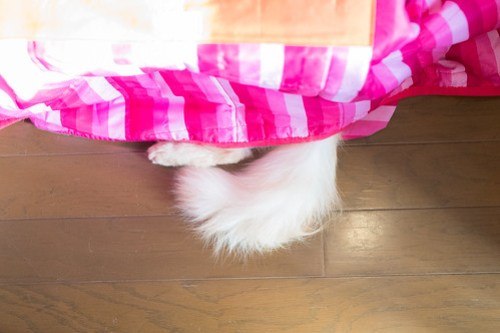 アトリエイエネコ Cat Photographer 25916205668_8bd46c473a 1日1猫!CaraCatCafe ダルくんになりたい! 1日1猫!  箕面 猫写真 猫 子猫 大阪 写真 保護猫カフェ 保護猫 Kitten Cute cat caracatcafe