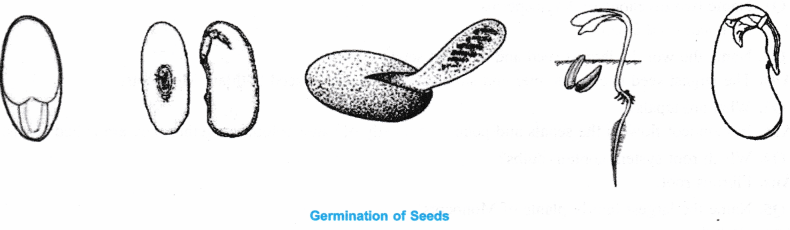 ncert-class-9-science-lab-manual-features-of-monocot-and-dicot-plants-3