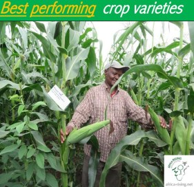 Introducing farmers to the best performing crop varieties.