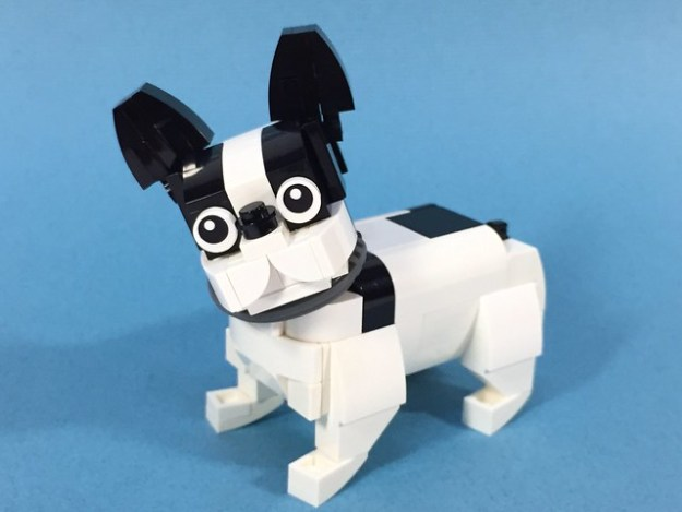 France Pulldog