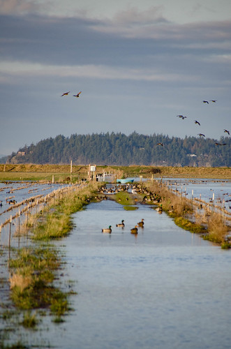 Skagit Morning Birds-5