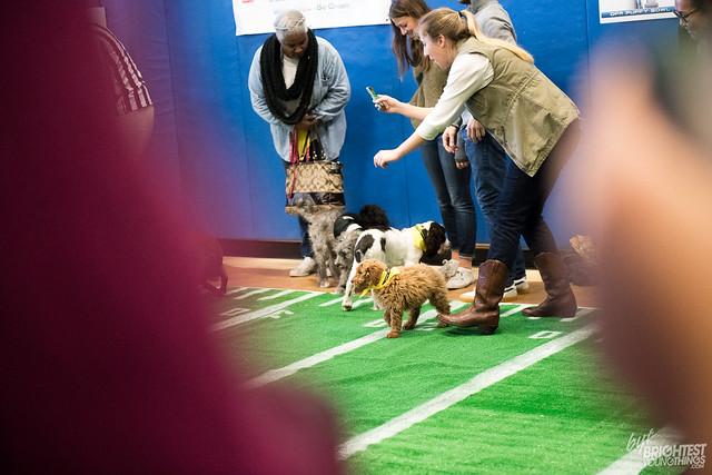 DPR Puppy Bowl 2018