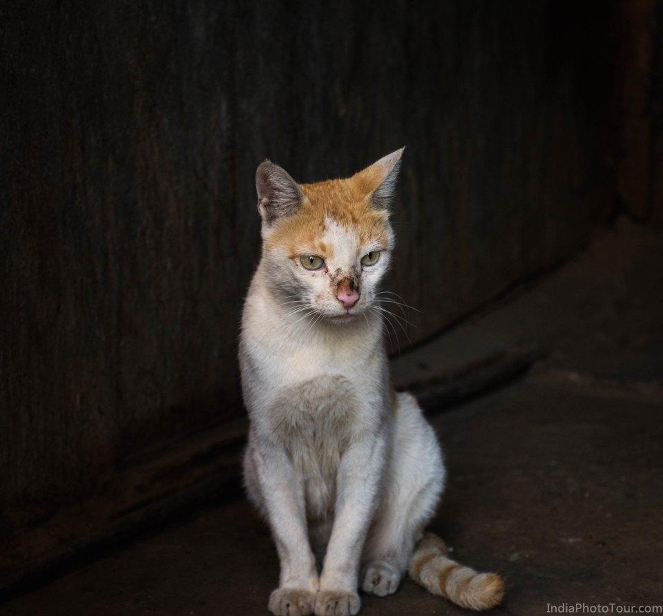 A cute cat