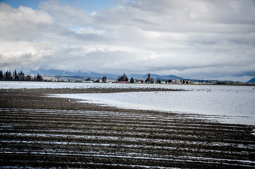 Skagit Fields-002