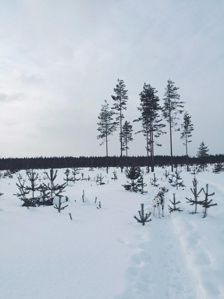 Sami-Petteri Asikainen