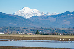 Skagit Bird Watching-11