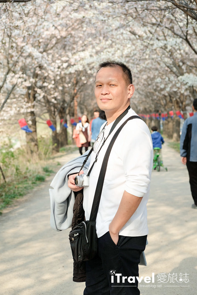 《首爾賞櫻景點》安養川櫻花路:綿延數公里的河川櫻花步道