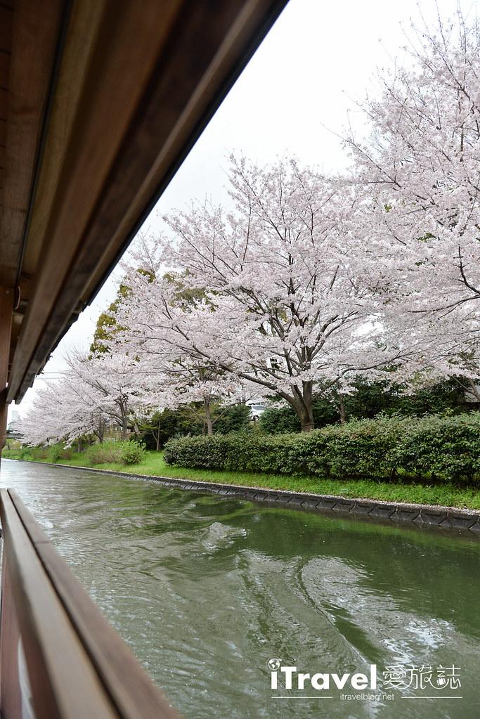 京都赏樱景点 伏见十石舟 (20)