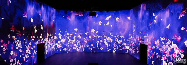 SAKURA YUME Cherry Blossom Dream