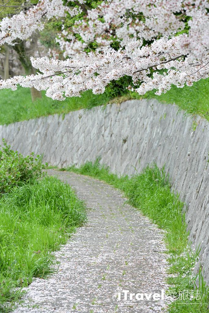 京都赏樱景点 伏见十石舟 (57)