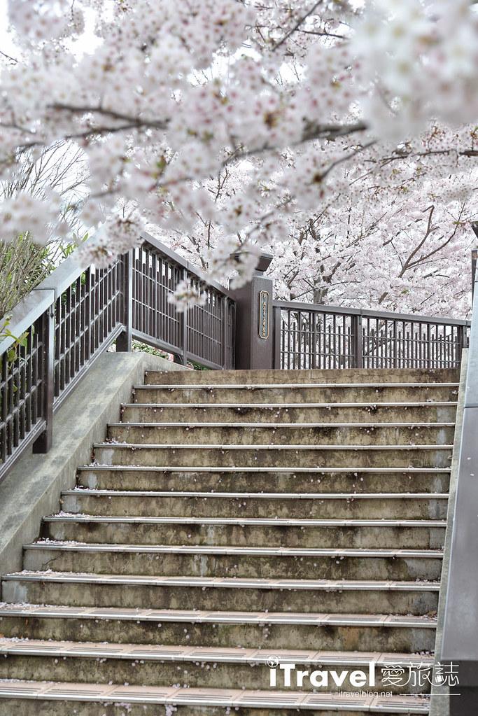 京都赏樱景点 伏见十石舟 (56)