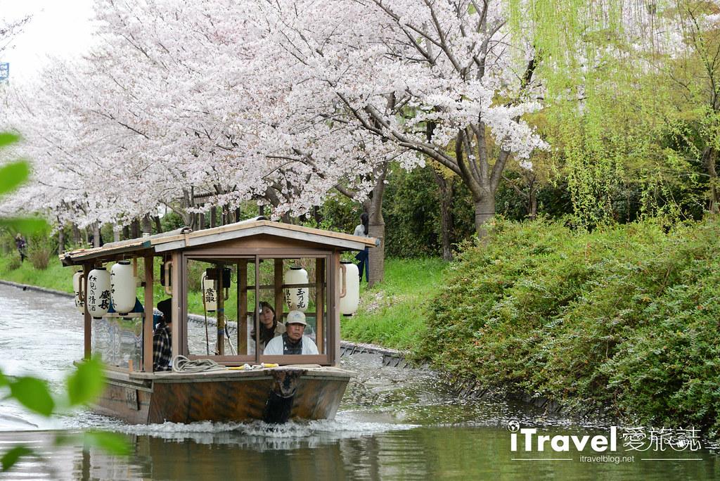京都赏樱景点 伏见十石舟 (46)