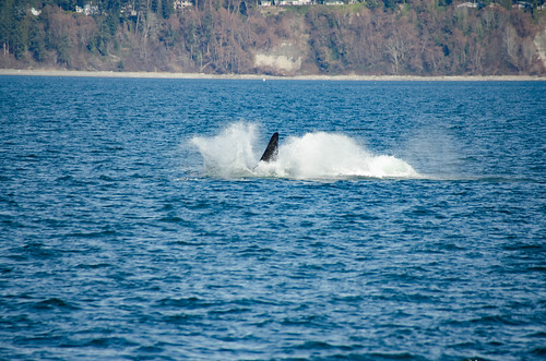 Whale Watching with Island Adventures-232