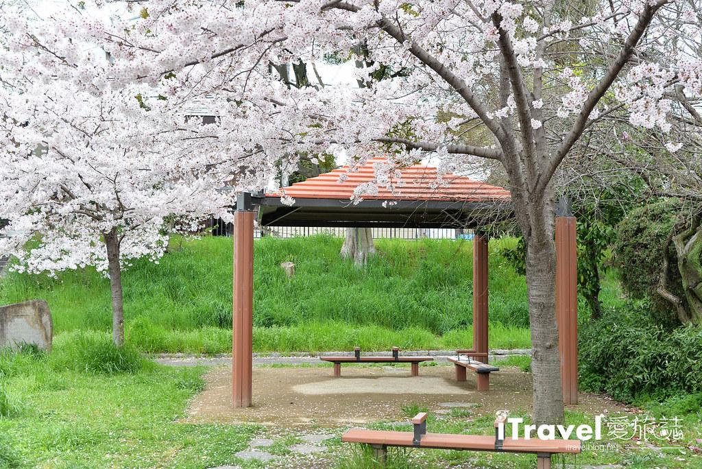 京都赏樱景点 伏见十石舟 (55)