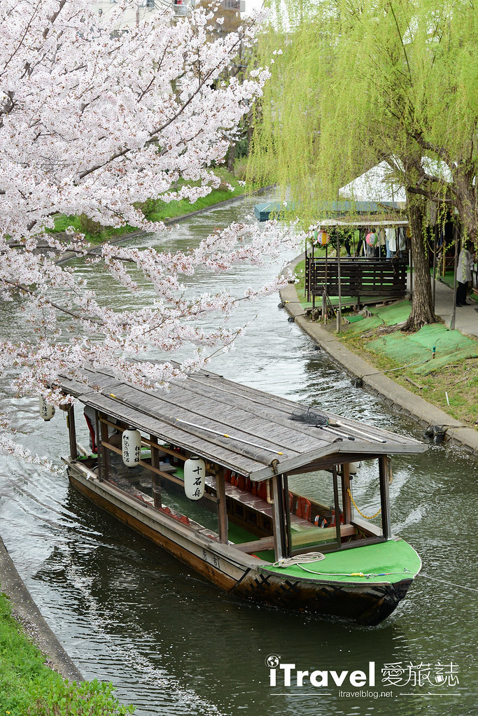 京都赏樱景点 伏见十石舟 (7)