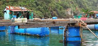 Floating Fisherman's village, Halong Bay