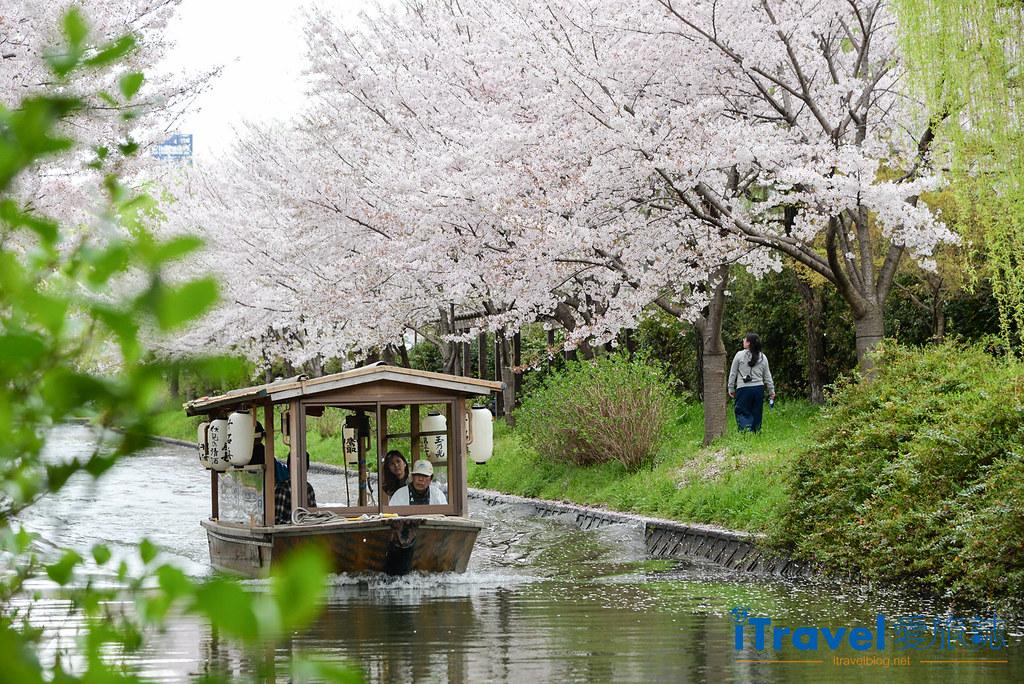 京都赏樱景点 伏见十石舟 (1)