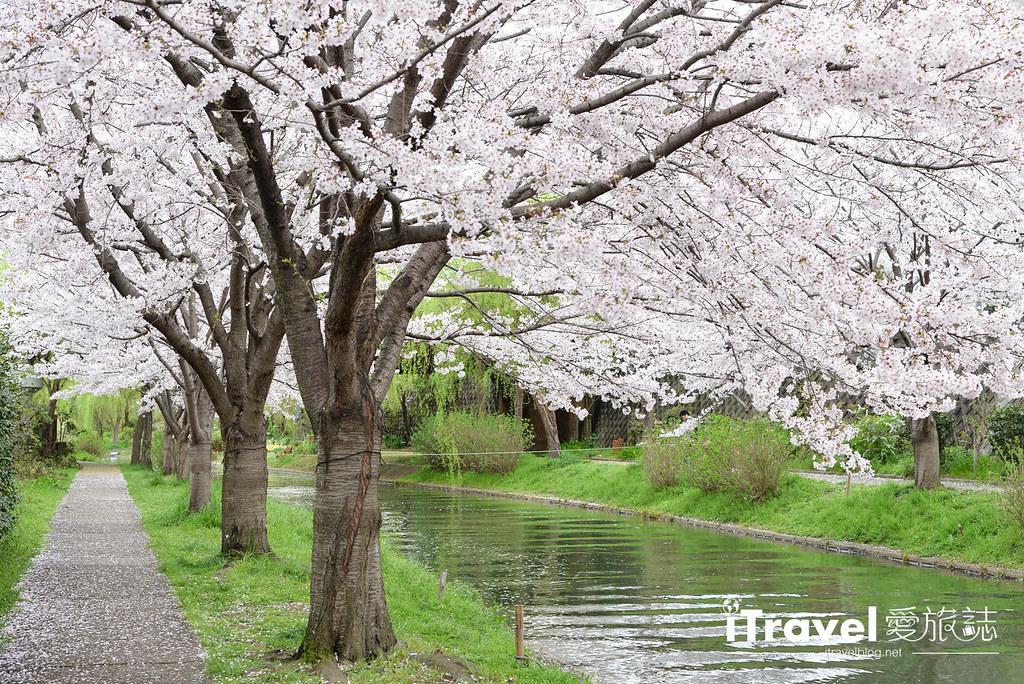 京都赏樱景点 伏见十石舟 (10)