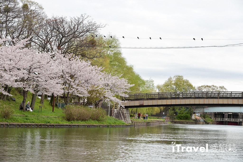 京都赏樱景点 伏见十石舟 (21)