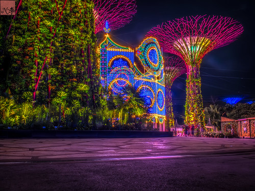 Supertree Grove, Singapore (3 of 1) (33 of 1)