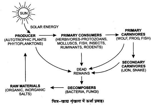 UP Board Solutions for Class 12 Biology Chapter 14 Ecosystem Q.12.1