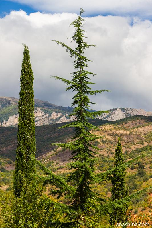Кипарисы и ель, Крым