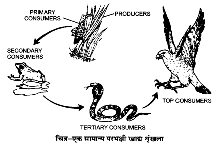 UP Board Solutions for Class 12 Biology Chapter 14 Ecosystem 2Q.2
