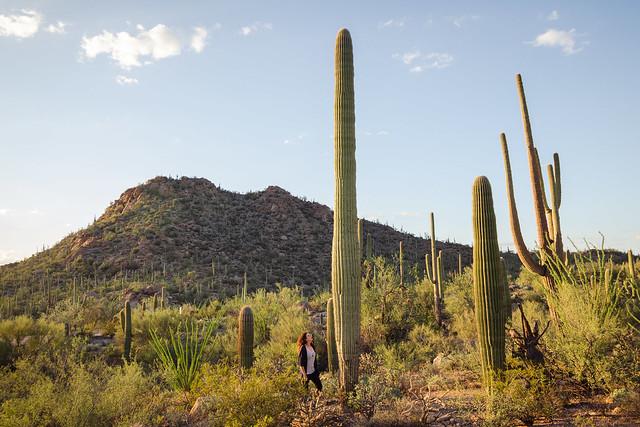 A Cacti Goodbye to Arizona // Saguaro National Park