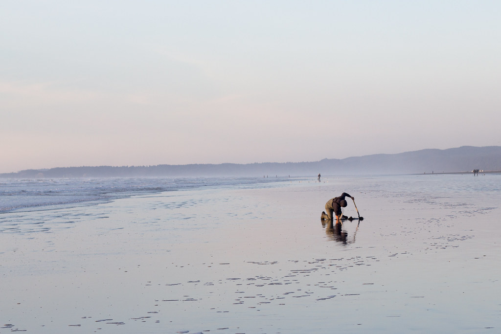 man digging for razor clams