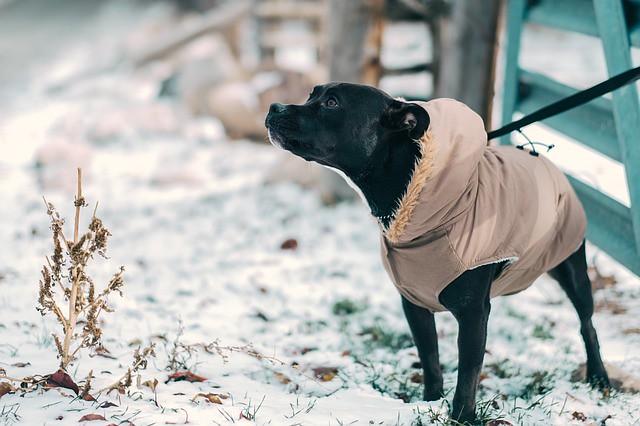 """防寒対策をして冬の散歩を楽しむ犬"""""""