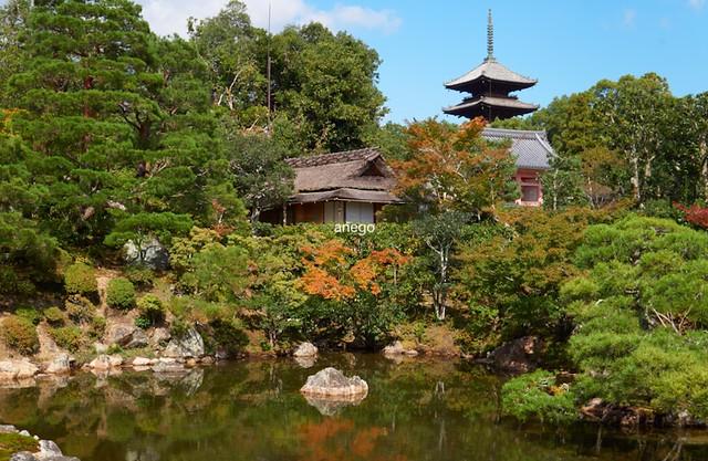 仁和寺 庭と五重塔