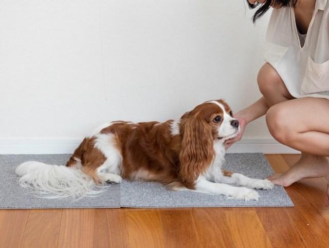 撫でる練習をしている犬