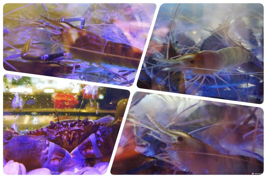 [桃園美食]一品活蝦桃園店~中正藝文特區新開活蝦料理專門店.產地直送現點現抓新鮮.桃園聚餐推薦餐廳(11月底前來店打卡分享,就送【特級美國骰子牛】) @VIVIYU小世界