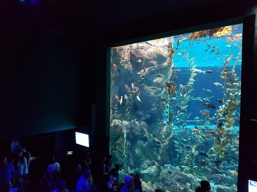 aquarium toronto