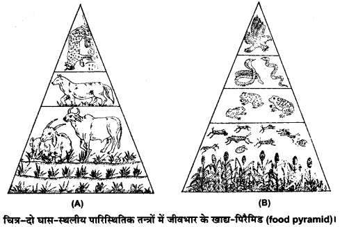 UP Board Solutions for Class 12 Biology Chapter 14 Ecosystem Q.9.1