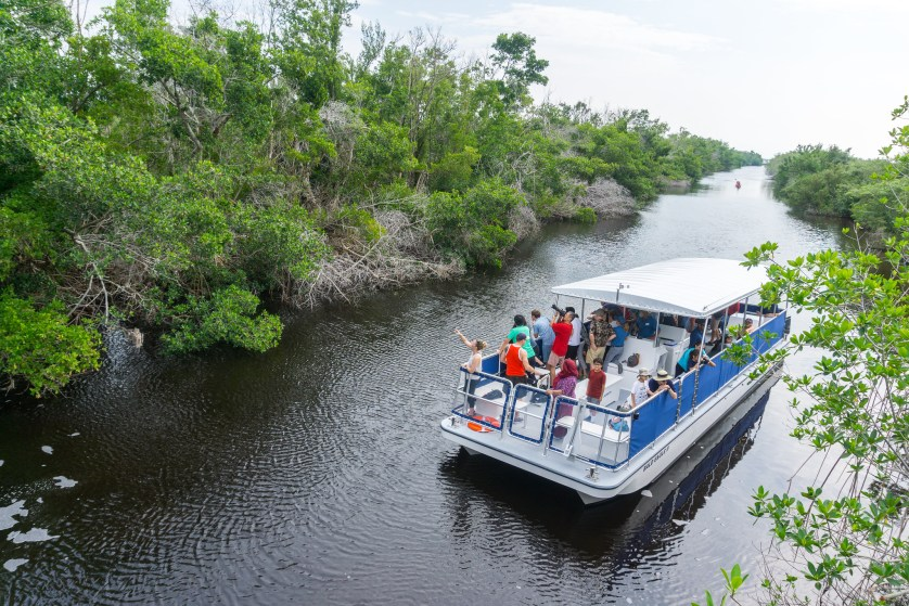 Bald Eagle II in the Buttonwood Canal - Visit to Flamingo in Everglades National Park, Nov. 2018