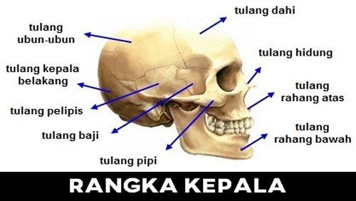 Kepala - Definisi, Fungsi, dan Penyakit Terkait