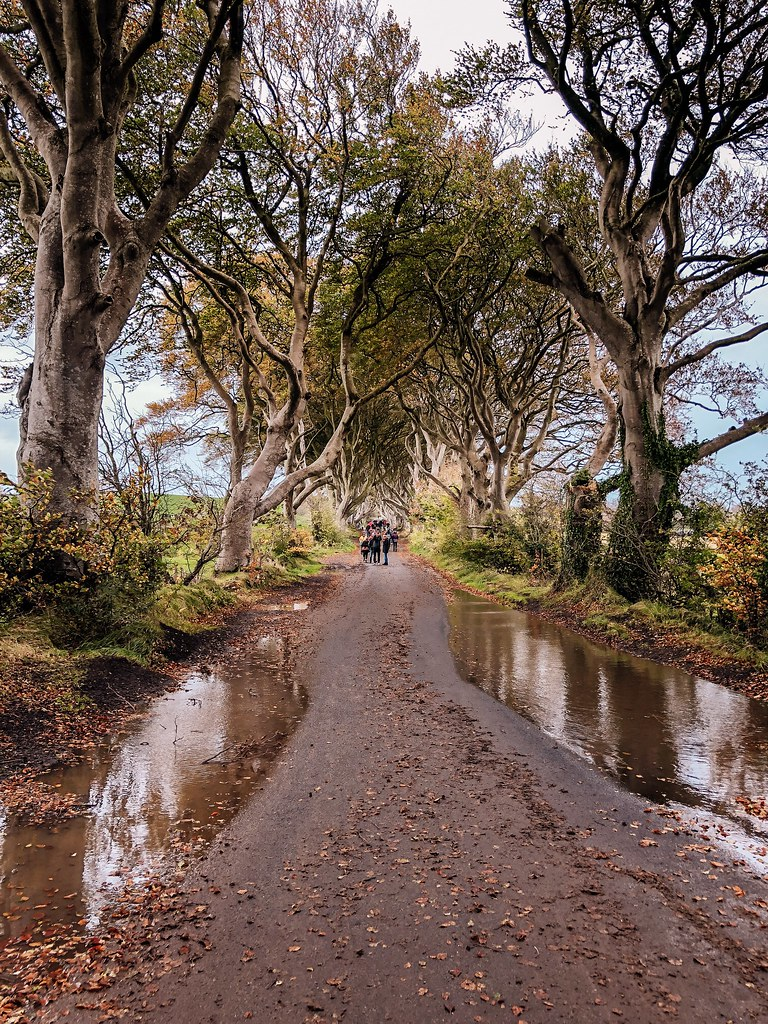 Dark Hedges | Ireland and Scotland Itinerary