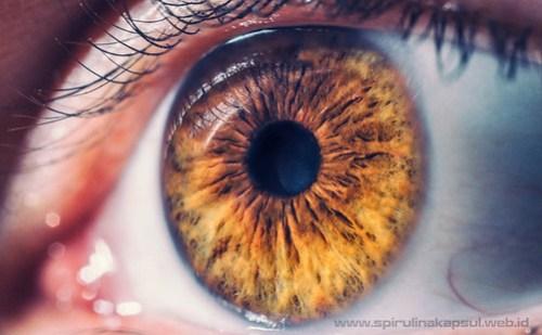 Obat Penyakit Retina
