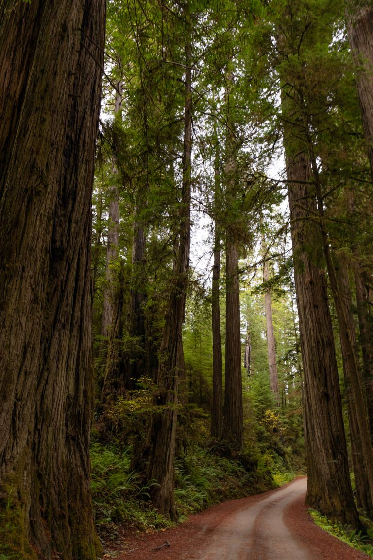 11.03. Jedediah Smith Redwoods State Park