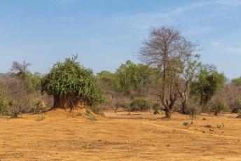 Dit lijkt op een termietenheuvel met een groene muts.